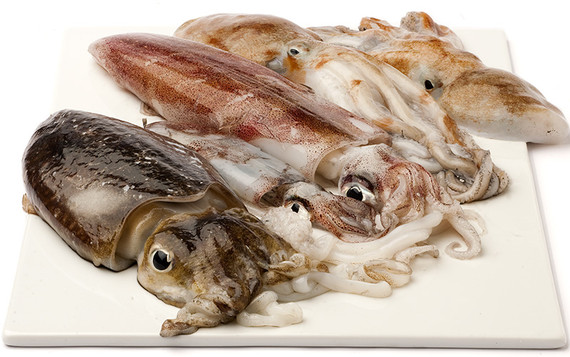 Calamari, Seppi e & Totani